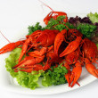 Boiled river lobsters — Stockfoto