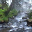 The current river the Prut in a fog — Stock Photo