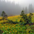 Fur-trees on a bog among yellow flowers - Stock Photo