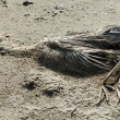 Bird dead — Stock Photo #2238561