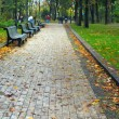 Benches in city park — Stock Photo #2238886