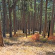 Stock Photo: Pine wood on slopes Ah-petri