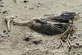 Bird dead — Stock Photo