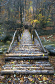 The bridge from logs through the river — Stock Photo