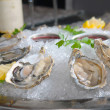 Oysters in ice with a lemon and wine — Stock Photo #2240642