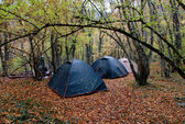 Three wet tents in wood in the rain — Stock Photo