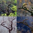 Four seasons - Stockfoto