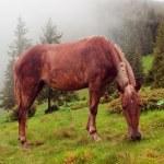 Horse are grazed — Stock Photo