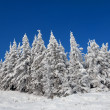 Royalty-Free Stock Photo: Snow-covered fur-trees