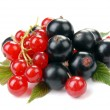 Red and black currant - Stock Photo
