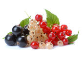 Red wihite black currant — Stock Photo