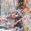 First snow on the yellow leaves — Stock Photo