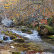 The mountain river in beechen - Stock Photo