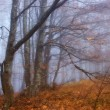 Beeches in a fog - Stok fotoraf