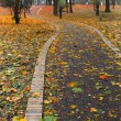 Path in park covered with autumn leaves - Stock Photo