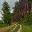 Stock Photo: Footpath in coniferous wood