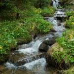 Mountain stream among stones — Stock Photo