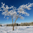 Winter tree — Stockfoto