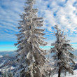 Two snow-covered fur-trees — Stock Photo