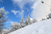 Winter forest of Carpathians — Stock Photo