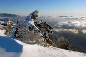 Na encosta de uma montanha pine — Foto Stock