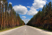 Highway among coniferous wood — Stock Photo