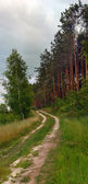 Footpath in coniferous wood — Stock Photo