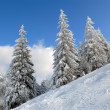 Panorama of the winter forest — Foto de Stock