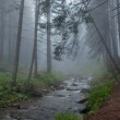 The mountain river in foggy wood — Stock Photo