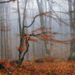 Autumn tree in the Crimean wood — Stock Photo