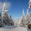 Panorama of the winter forest — Stock fotografie