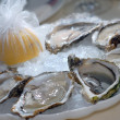 Oysters in ice — Stock Photo