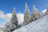Panorama of the winter forest — Stock Photo