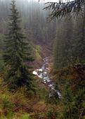 Landscape Carpathians — Stock Photo