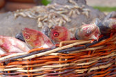 Fresh fish in a wattled basket — Stock Photo