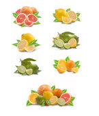 Collection of citron fruit — Stock Photo