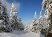 Panorama im winter wald — Stockfoto
