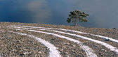 The Crimean pine over breakage — Stock Photo