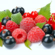 Raspberry red and black currant — Stock Photo