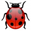 Stock Vector: Insects, ladybug