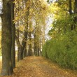 Avenue in autumn park — Stock Photo