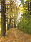 Проспект в Осенний парк — Стоковое фото