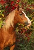 Horse in the autumn garden — Stock Photo