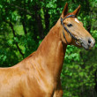 Golden horse — Stock Photo