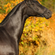 Stock Photo: Black horse in the autumn background