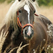 Stock Photo: Horse in the autumn meadow