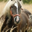 Horse in the autumn meadow — Stock Photo