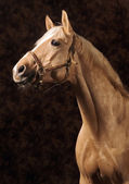 Palomino horse — Stock Photo