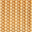 Hexagonal cells — Stock Photo