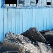 Blue hut — Stock Photo